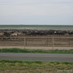 Cattle ranches in Texas who would have thought