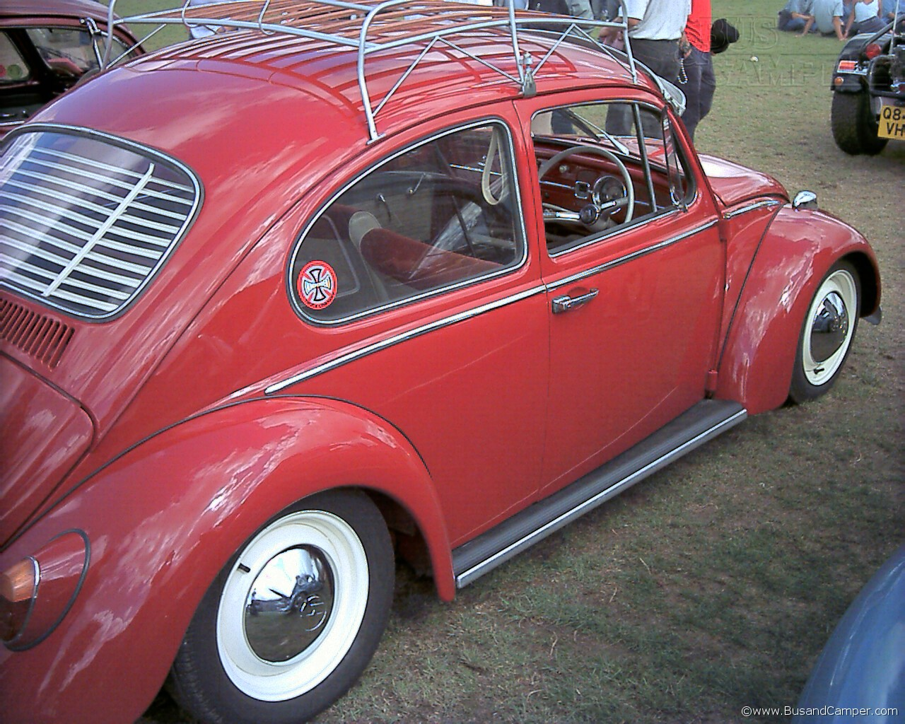 ruby red beetle