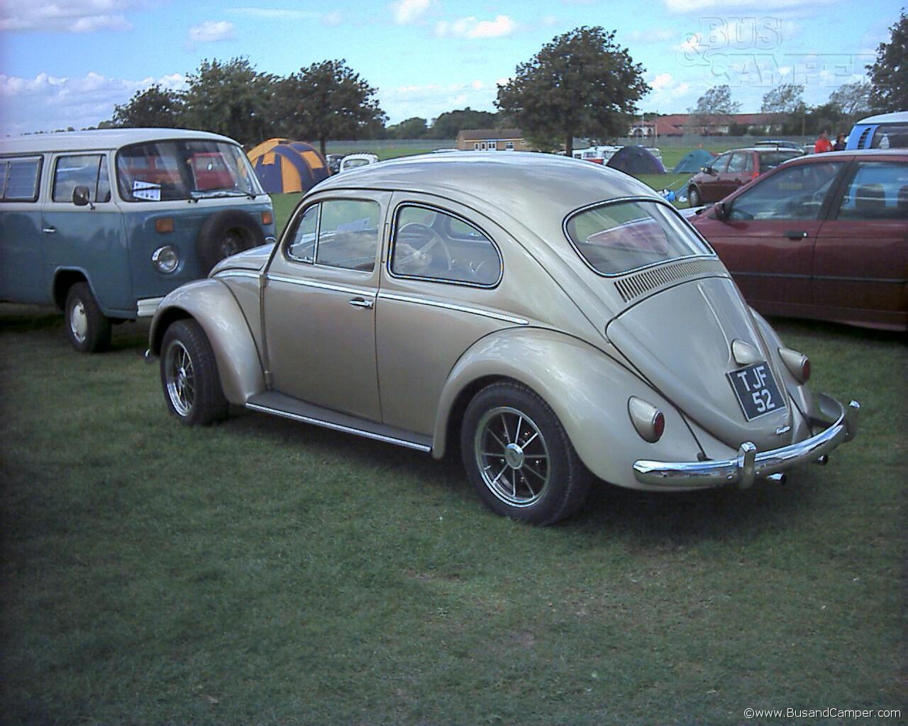 semaphore beetle