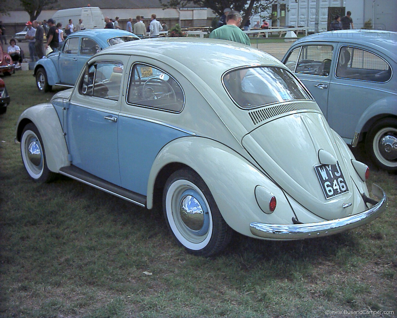 two tone beetle