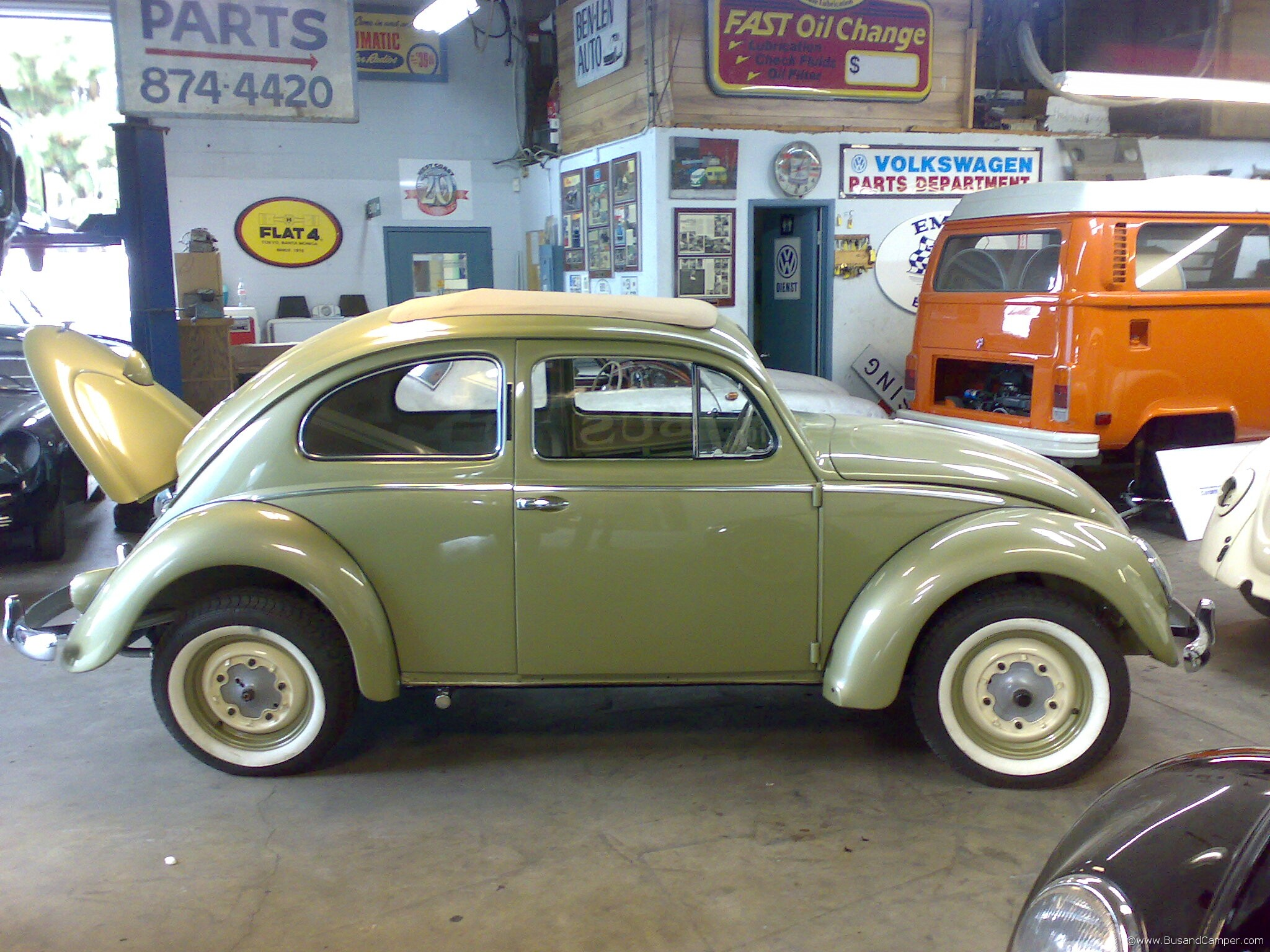 Semaphore ragtop beetle