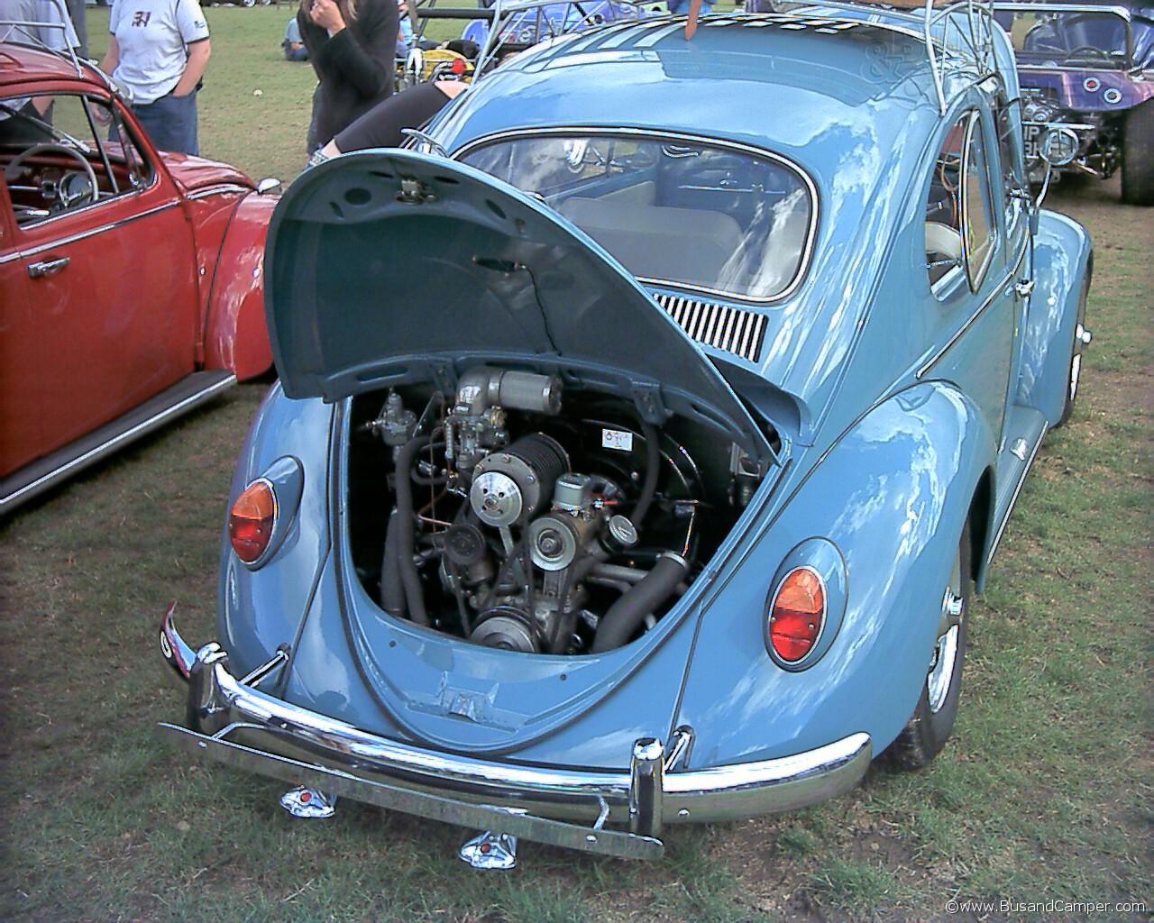gulf blue beetle