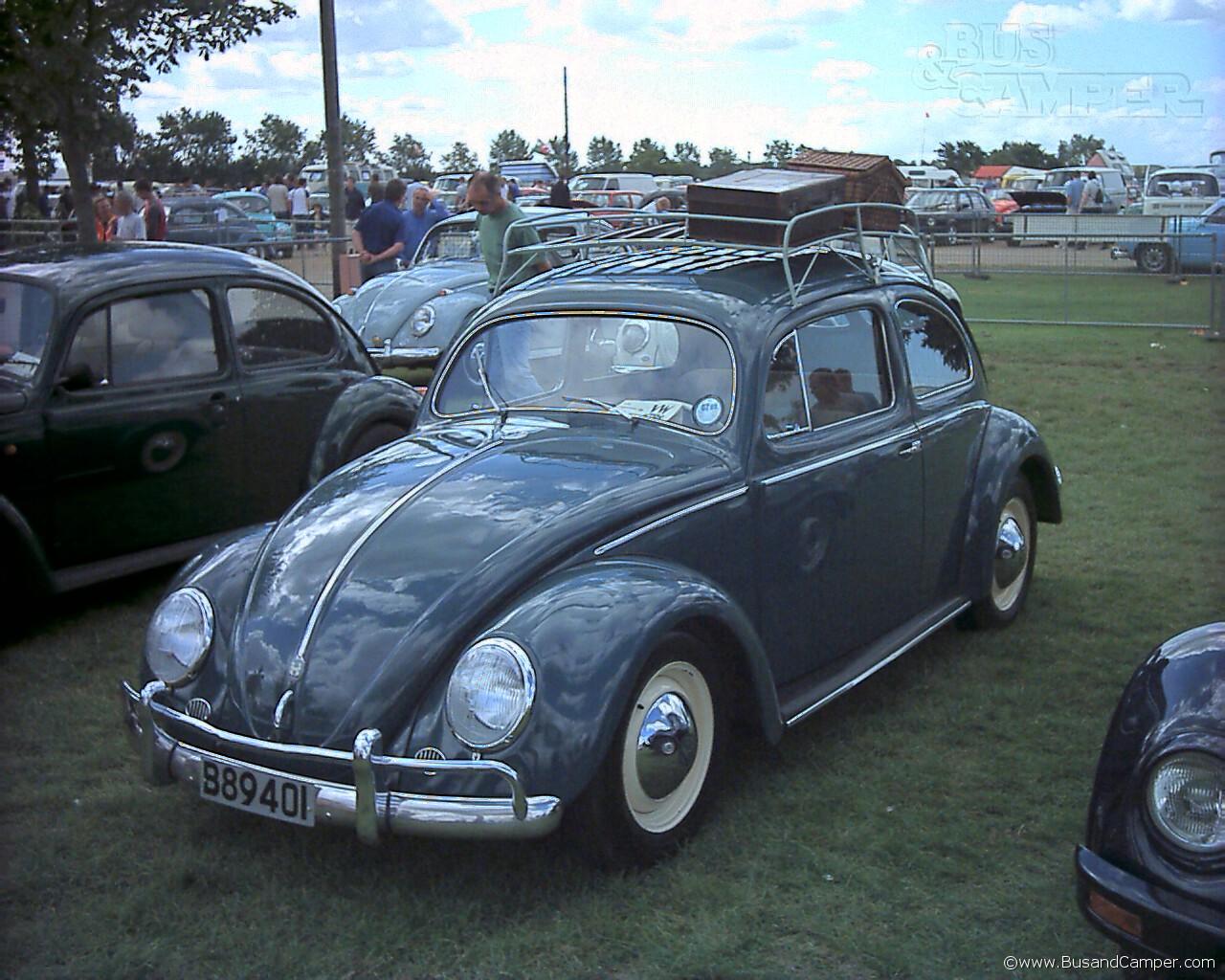 nice split window beetle
