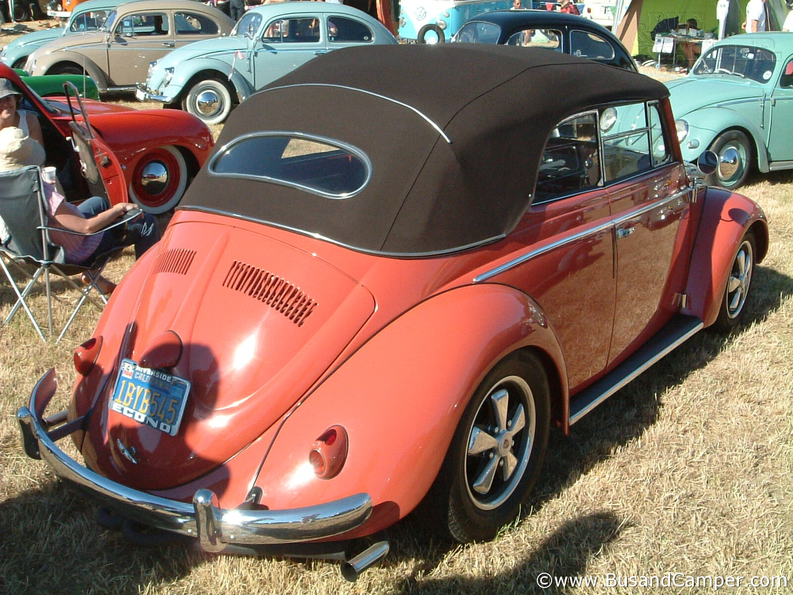 Karmann Beetle coral